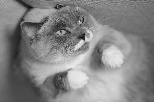 medel om rädd katt