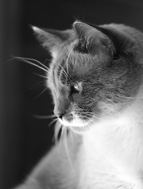 oroliga katter